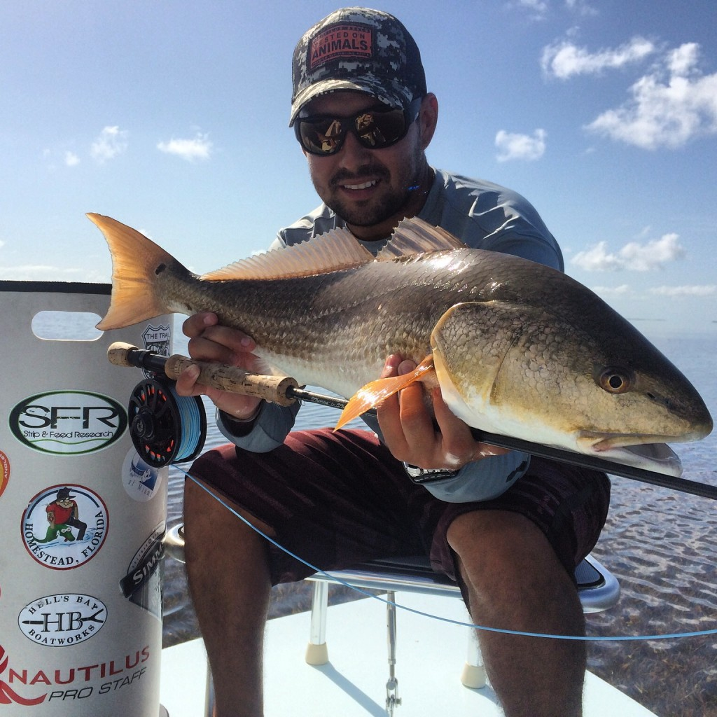 flamingo fishing charters client with redfish on fly rod