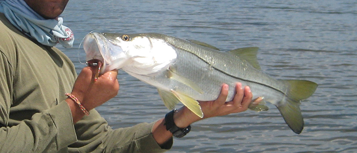 miami snook guide